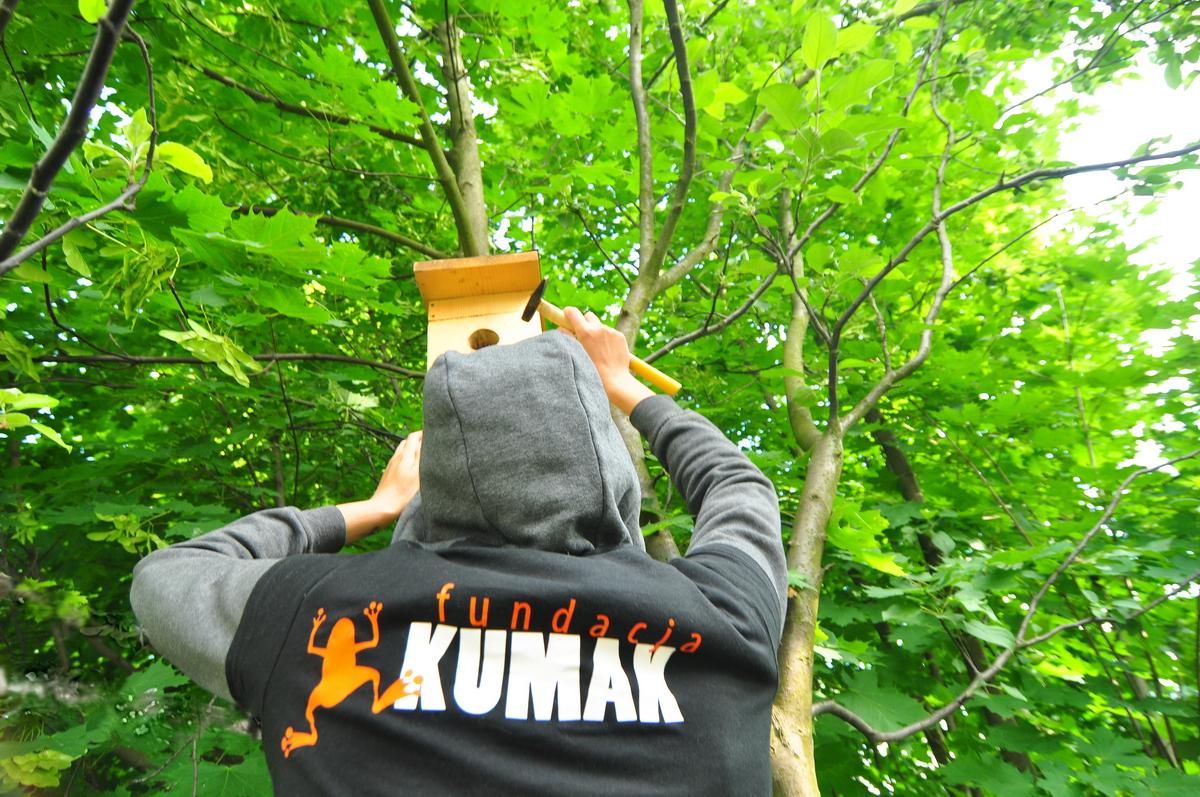 Fundacja Kumak wiesza budki dla ptaków